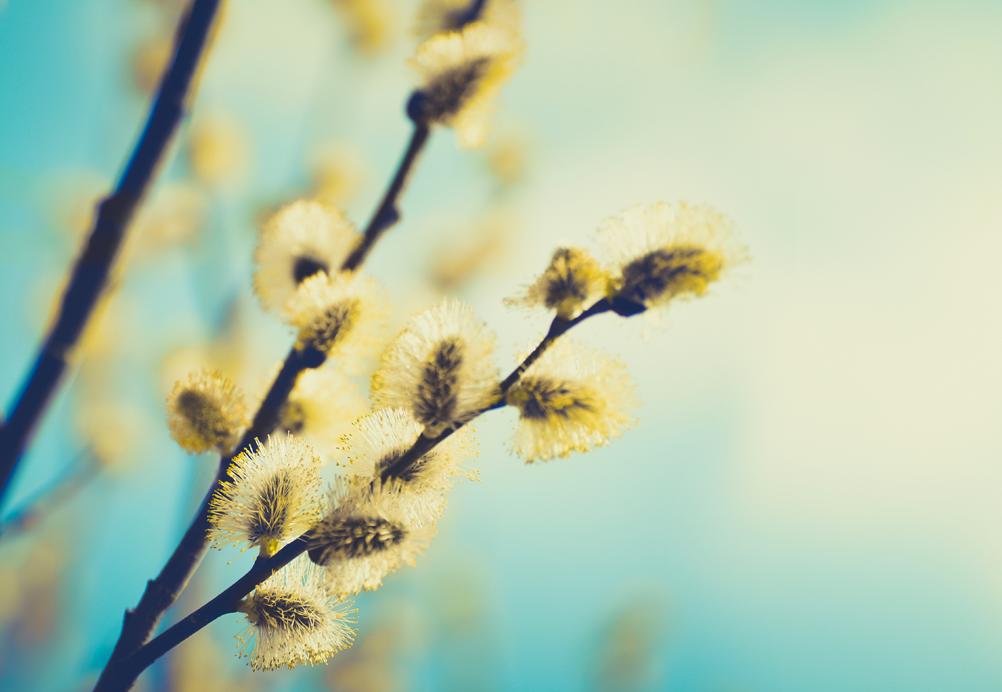 Carte de vigilance Pollens
