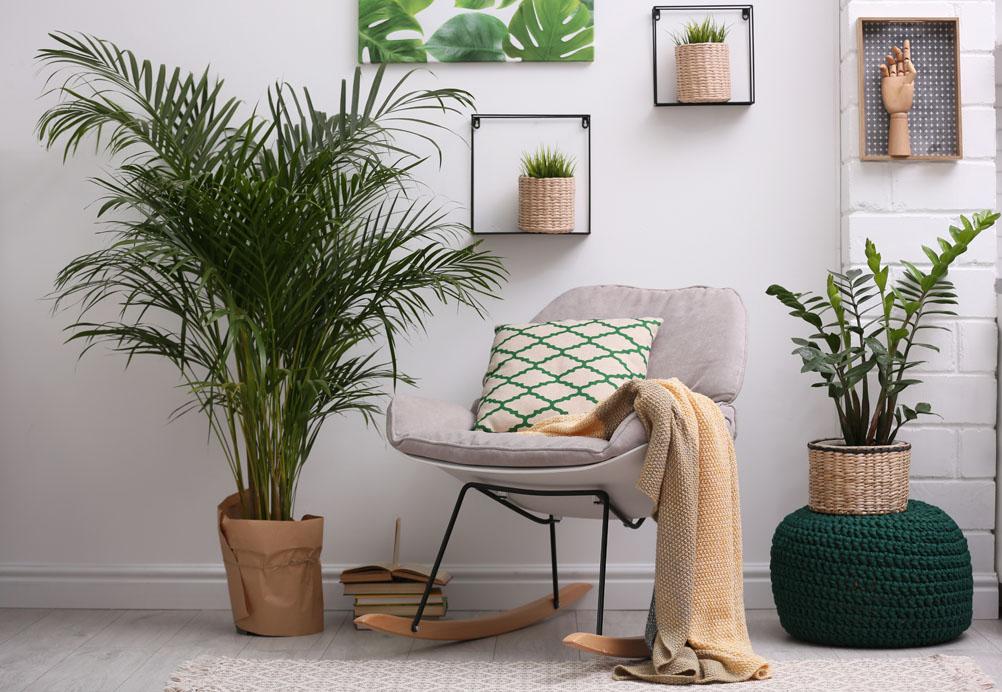 Les plantes d'intérieur : vraiment dépolluantes ?